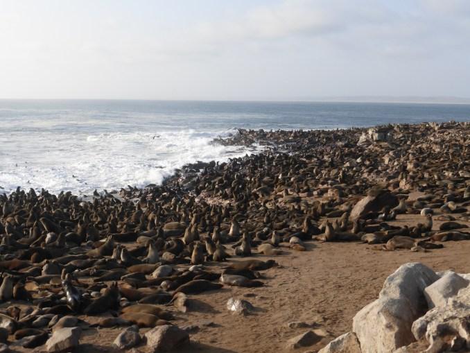 Skeleton Coast, na Namíbia (foto: Sergio Conti/Flickr-Creative Commons)