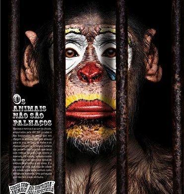 🐘 Os animais não são palhaços! Diga não ao turismo com animais