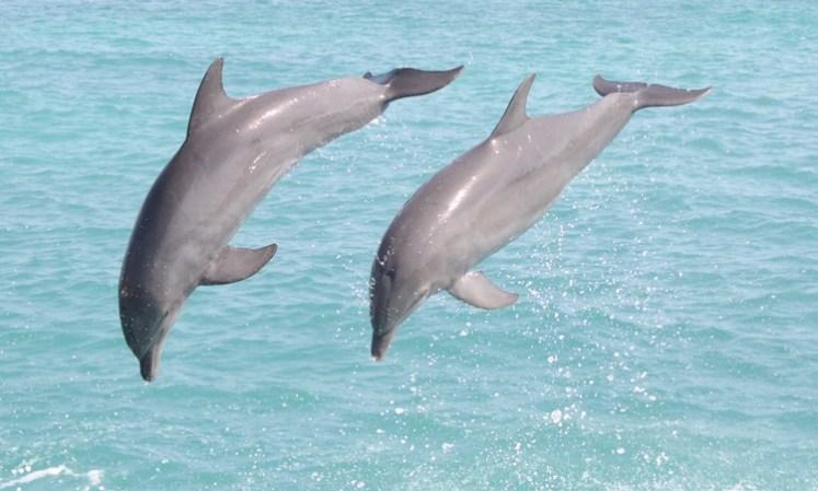 Durante o nado com os golfinhos, antes da interação. Dolphin Discovery