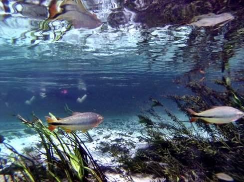 Barra do Rio Sucuri - Um dos rios mais cristalinos do Brasil e do Mundo