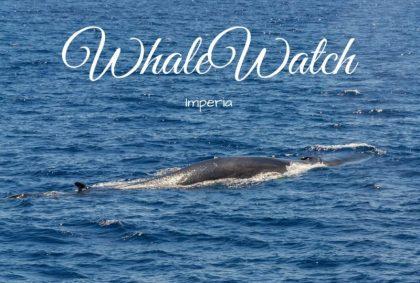 Titolo WhaleWatch Imperia