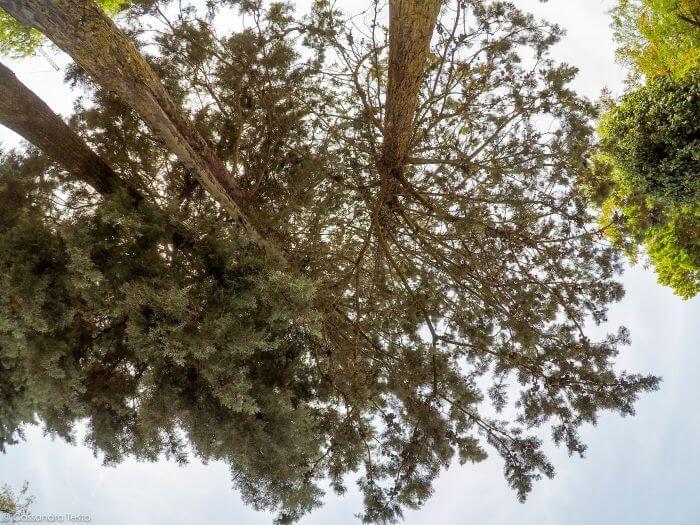 Le aree verdi di Acquatica Park