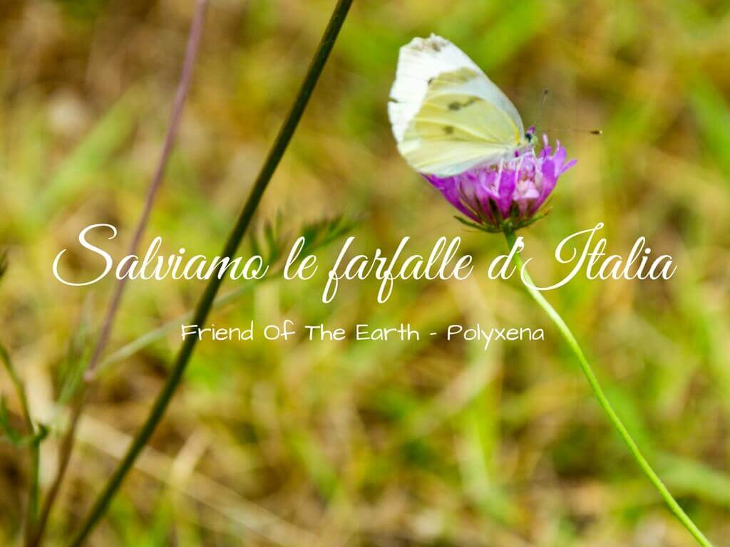Salviamo le farfalle d'Italia, il progetto di Friend Of The Earth e Polyxena