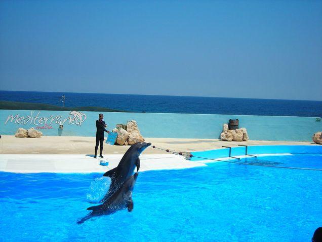 Spettacolo con i delfini a Marine Park sull'isola di Malta