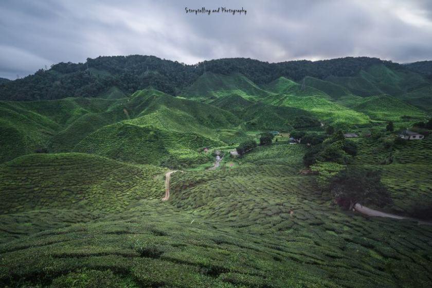 Cameron highlands malesia