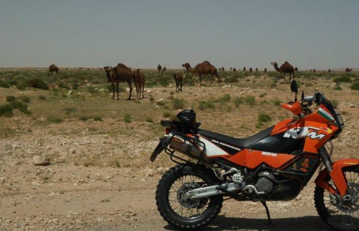 ciccions cammelli