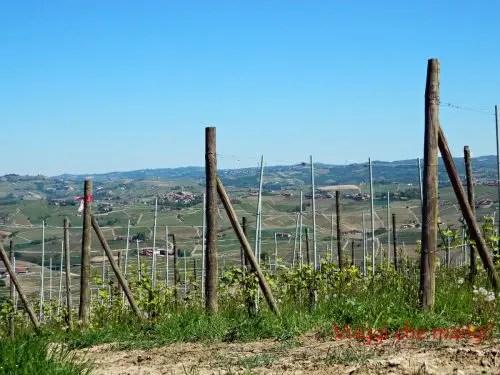 Vigneti area attrezzata San Pietro delle Viole