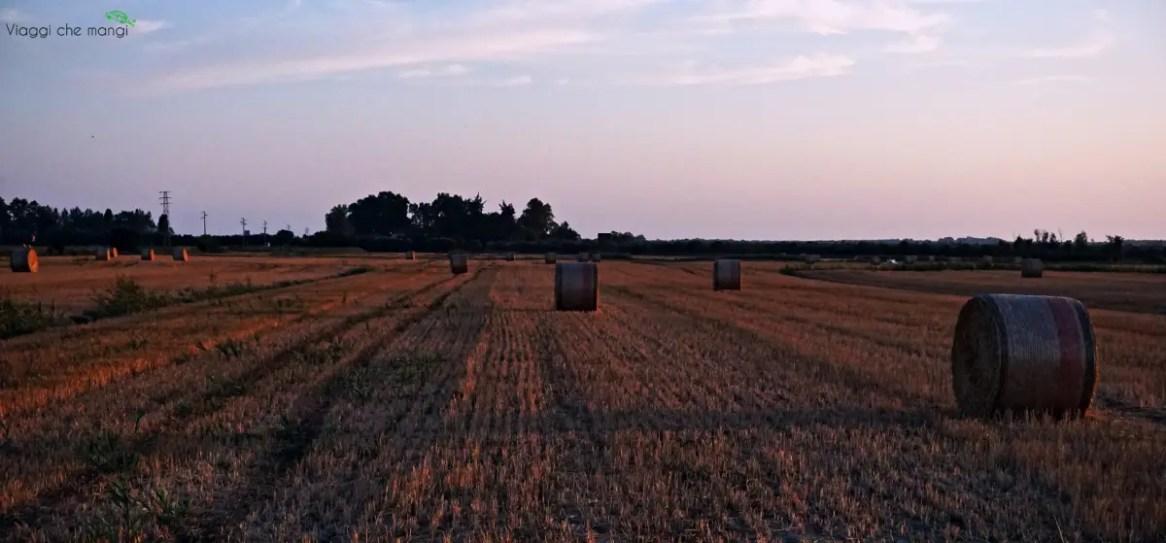 i bellissimi campi nei dintorni di Massaciuccoli in Versilia, al tramonto.