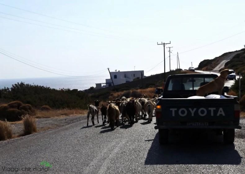 camminare per le strade dell'isola di milos ed incontrare le caprette.