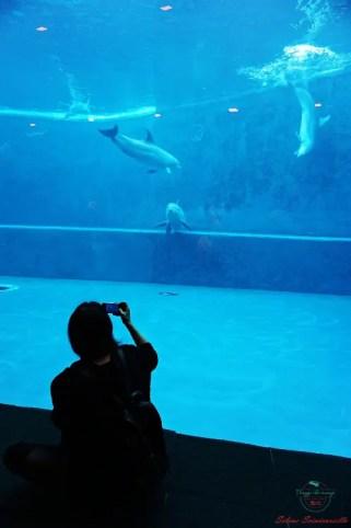 visita all'acquario di genova vasca dei delfini
