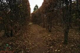 Il Labirinto di siepi del parco di masino, nei dintorni di biella.