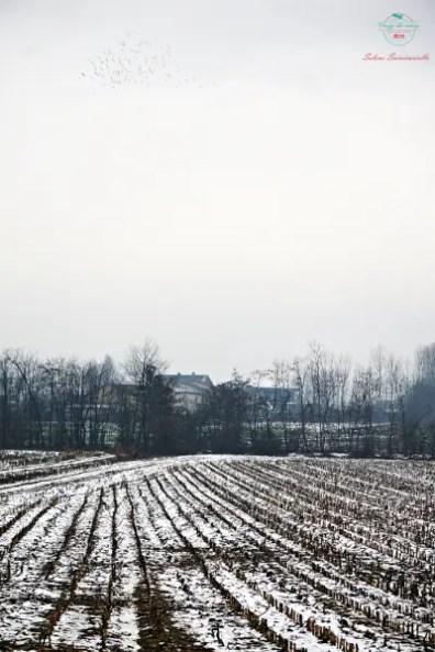 I campi innevati nei dintorni di Poirino, Piemonte.