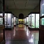 Le bacheche del museo di storia naturale giacomo doria, tra i migliori musei di genova.
