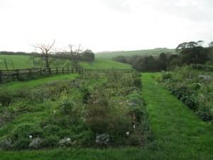 Il campo del Garden Gate Flower Company