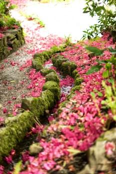 cotehele petali