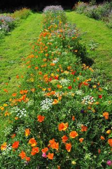 orto fiorito
