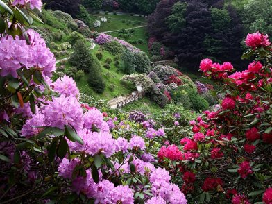 Conca rododendri