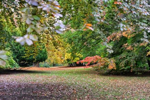 blenheim arboretum