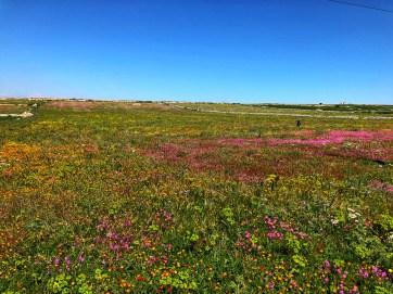 wildflowers april
