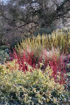 botanic gardenIMG_2115_099