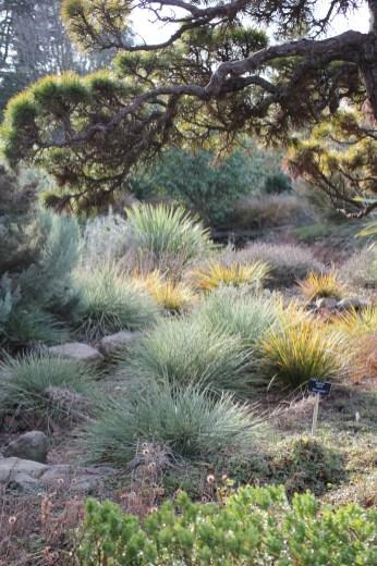 botanic gardenIMG_5246_116