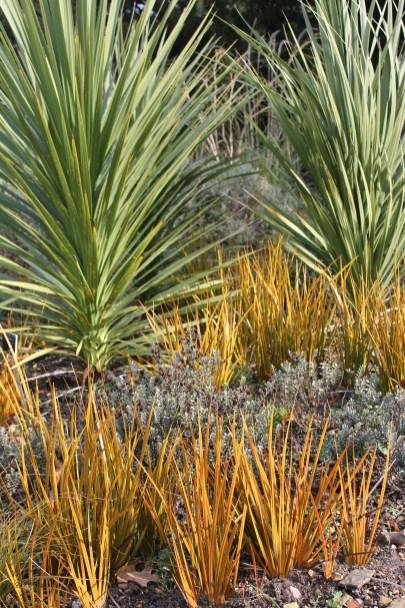 botanic gardenIMG_5247_117