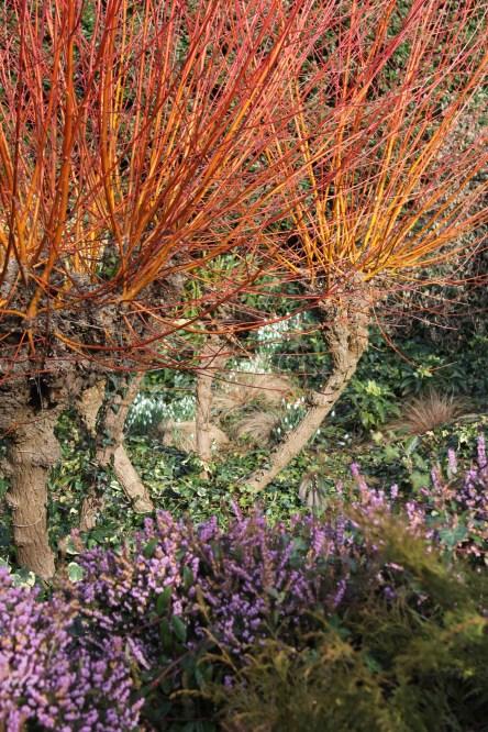 botanic gardenIMG_5273_141