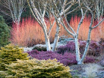 winter-plants-winter-garden-bressingham-gardens_12195