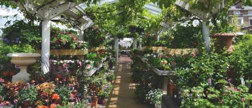 Clifton-nurseries-london2-28b3ef9