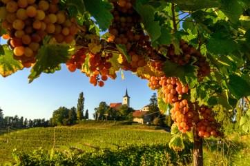 F013936-termalno_panonska_slovenija_pomurje_andrej_tarfila_6-photo-m