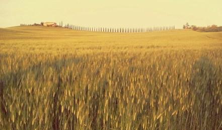 Tour fotografico della Val dOrcia tra campi di grano
