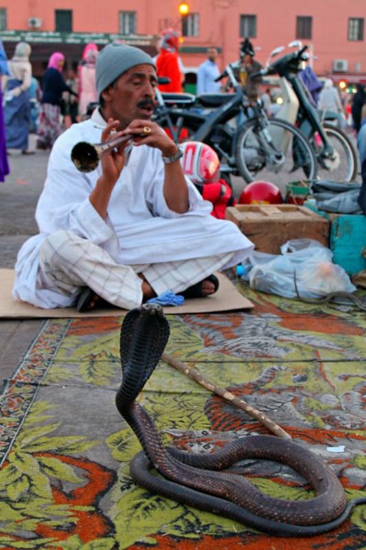 Incantatore di serpenti a Marrakech - Marocco