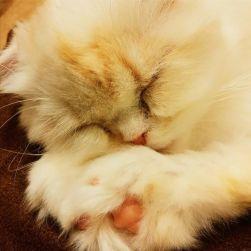 La mia prima volta in un Neko Cat Cafè, i locali giapponesi ormai diffusi in tutto il mondo e nei quali è possibile degustare bevande in compagnia di dolcissimi felini. Peccato il conto decisamente salato!
