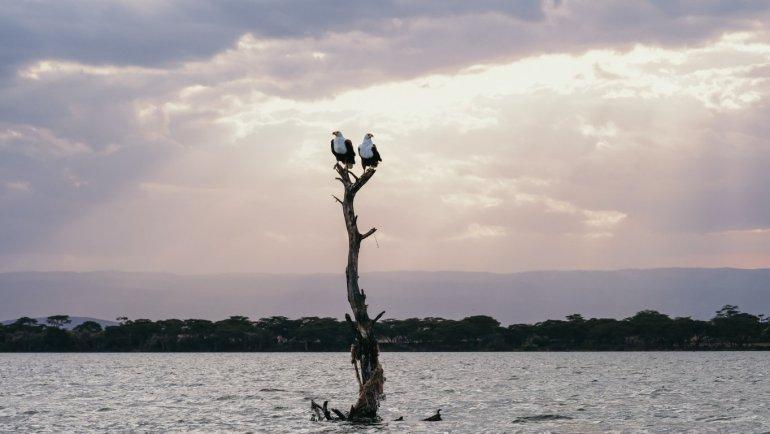 Aquile - Lake Naivasha