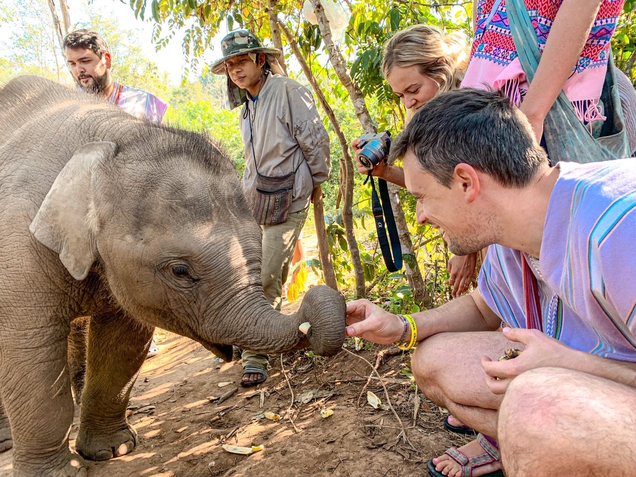Santuario degli elefanti a Chiang Mai
