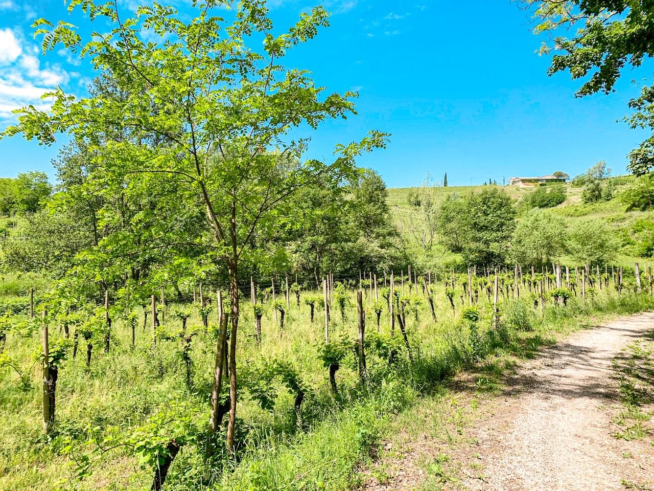 Bosco Romagno: natura, sentieri, escursioni e pic-nic