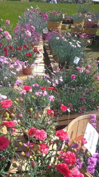 tre-giorni-per-il-giardino-castello-di-masino (14)