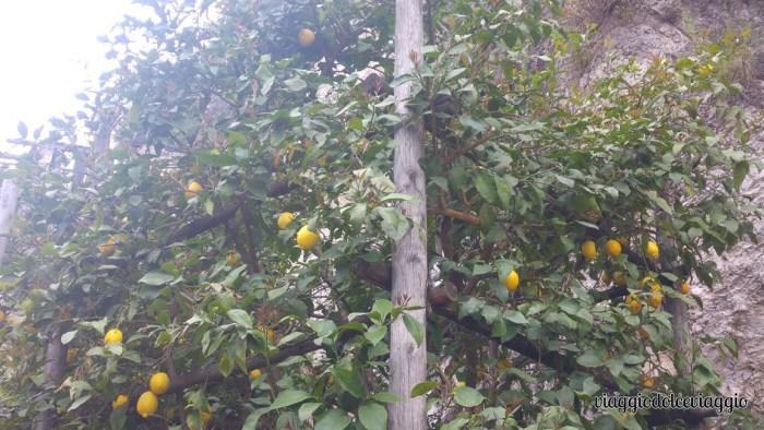 12-limone-lago-di-garda (3)