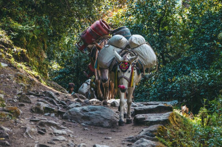 everest base camp muli