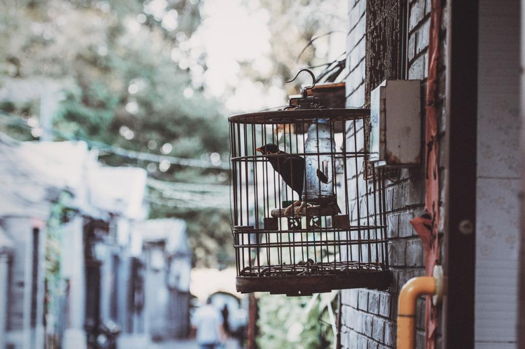 gabbia uccellino