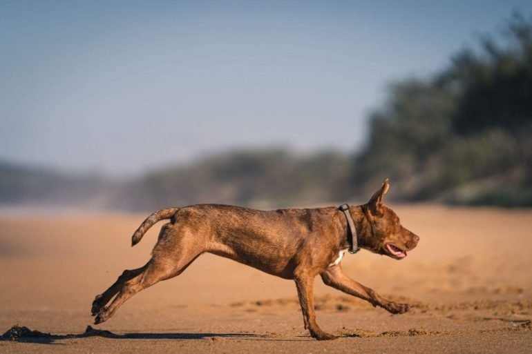 foto al cane con 70-200