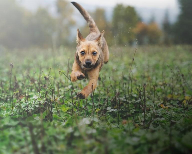 Fotografare cani