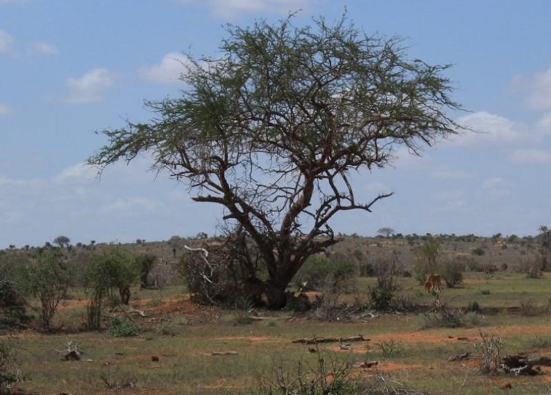 Viaggi zaino in spalla: safari in Kenya