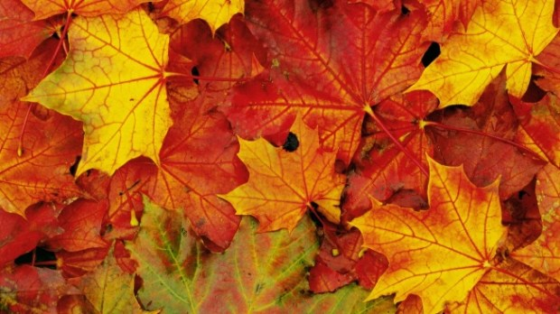 Week end d'autunno