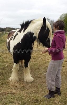 Séance avec cheval