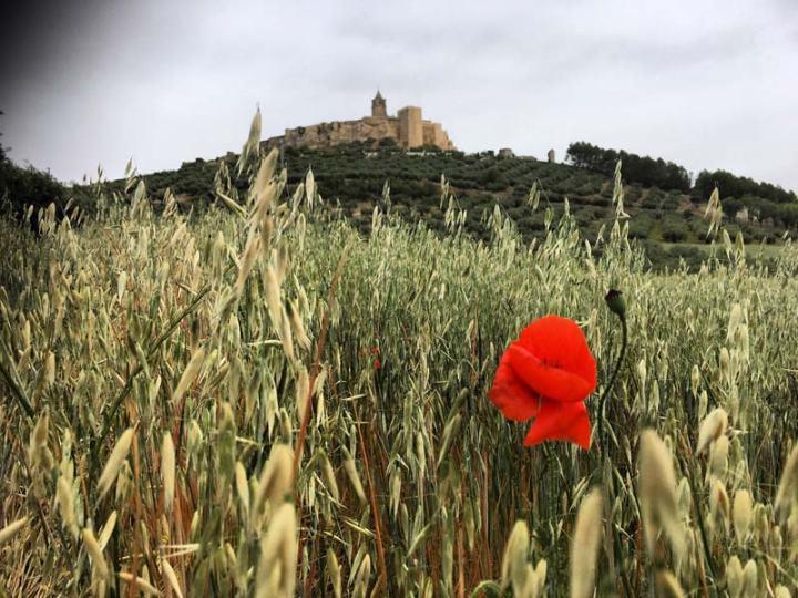 campos-andalucia