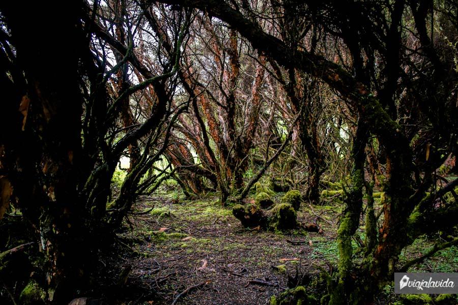 Camino en medio del bosque y bajo árboles