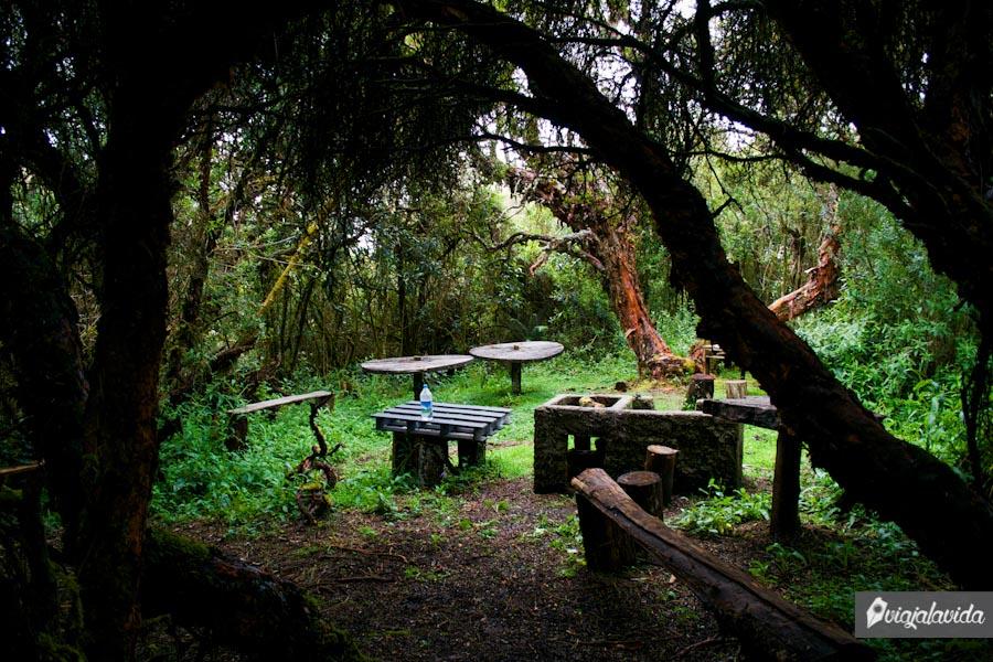 Mesas rodeadas por grandes árboles
