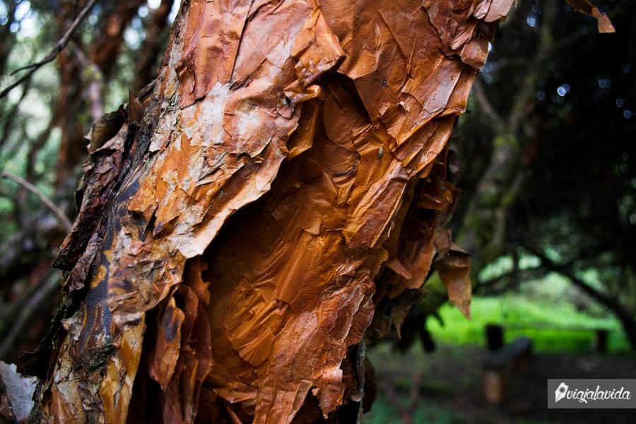 Tronco raro de un árbol en el bosque