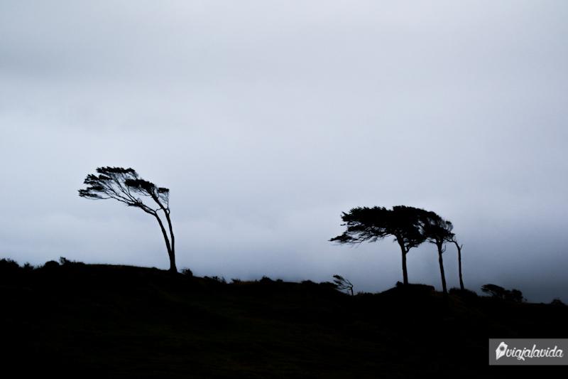 Árboles doblados por los vientos en Punta Arenas.